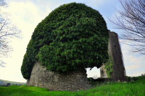 Petersdorf – eine Burg im Dornröschenschlaf
