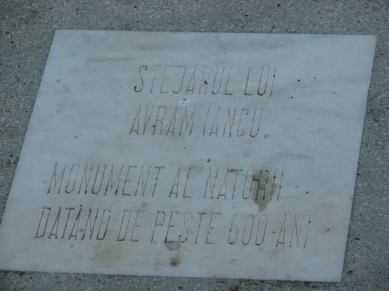 Die Legende der Avram Iancu Eiche, ein die über 600 Jahre alt ist