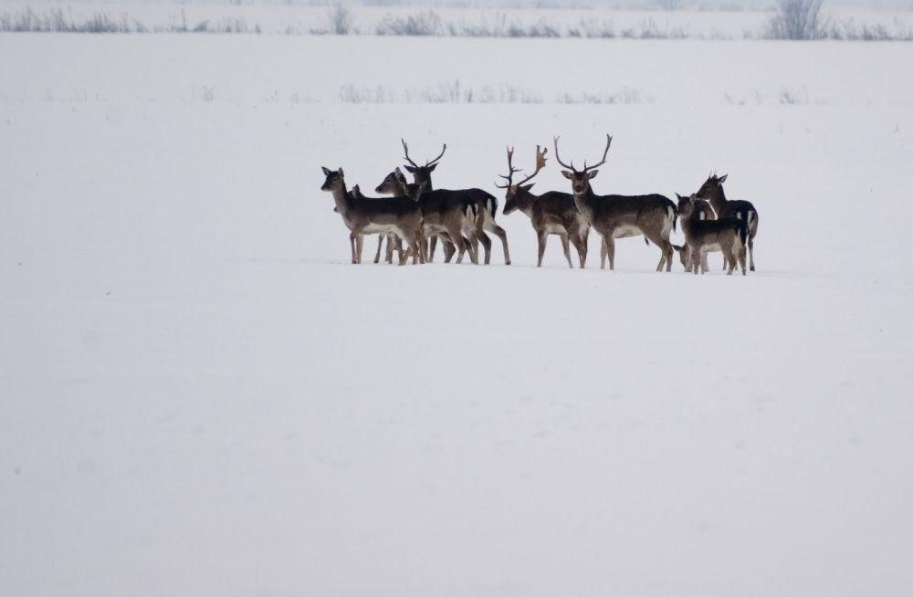 Transilvania, unul dintre cele mai frumoase locuri sa-ti petreci iarna din Europa