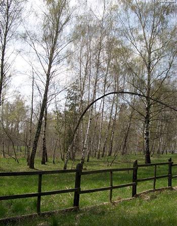 Rezervatia naturala din lunca Raului Negru, locul unde s-a filmat Cold Mountain