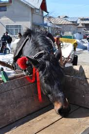 Pferde Ostern in Siebenbürgen, eine der ältesten Feiertage