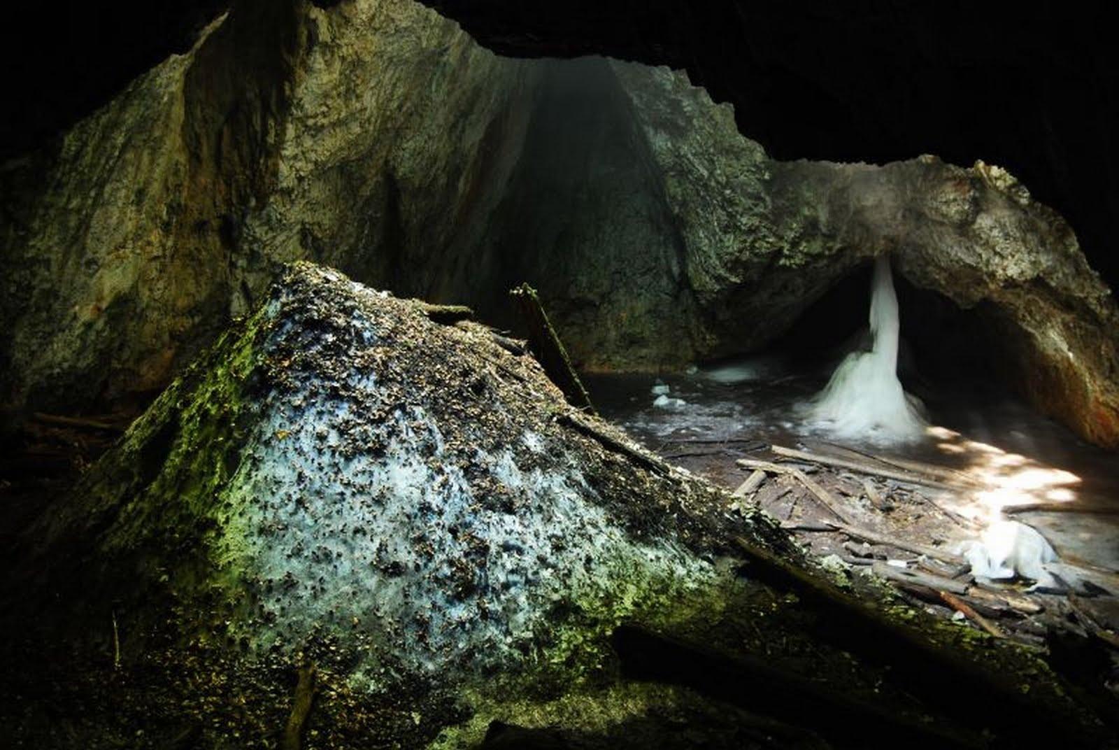 Peștera Focul Viu
