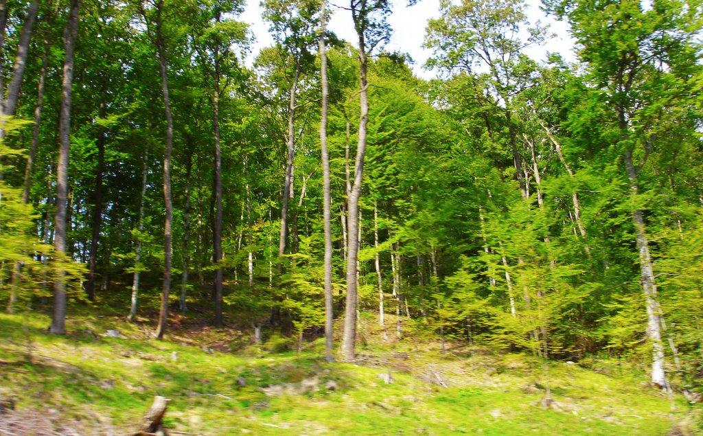 Pădurea Bogății